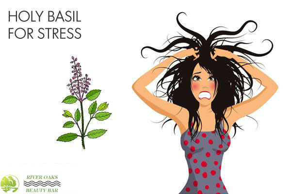 holy-basil-for-stress